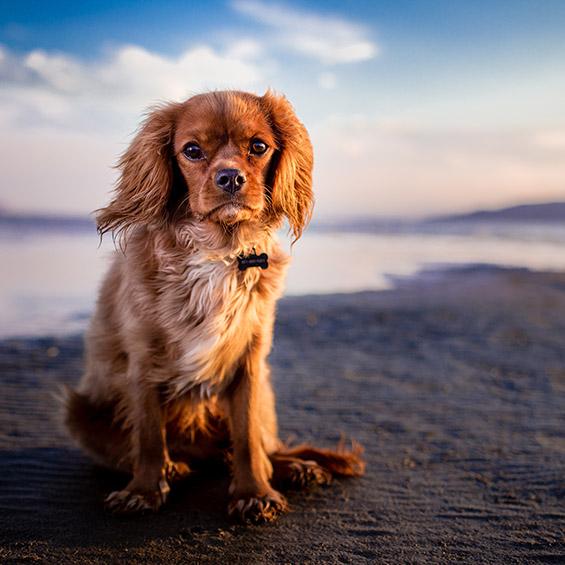 aiuta-il-tuo-cane-a-superare-le-sue-paure