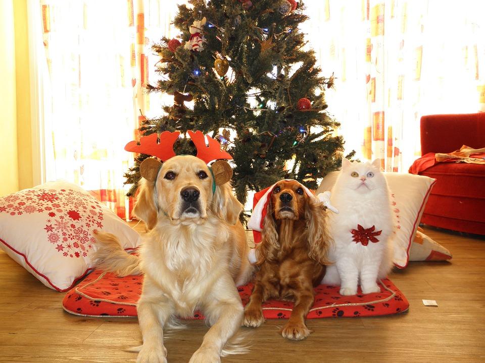 regalare-un-animale-domestico-come-regalo-di-natale-e-una-buona-idea