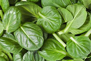 spinach brain food
