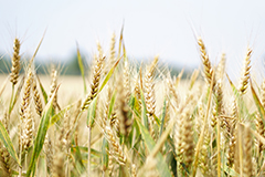 Cereals and whole grains can be a fantastic way to add fibre to your diet.