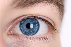 Does vitamin E help to protect against age-related macular degeneration?