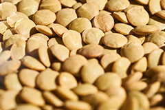 Pulses are great dietary ingredients for people who suffer with constipation.