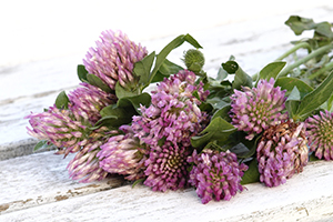 Red clover is rich in isoflavones which may help to suppress some symptoms of the menopause.