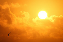 Vitamin D from sunlight is crucial for ensuring that your body can absorb and utilize calcium in the diet.
