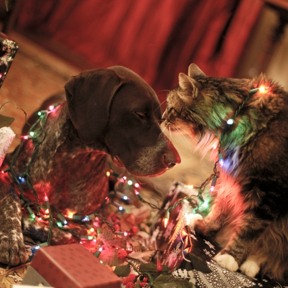 Christmas Pet Safety Checklist