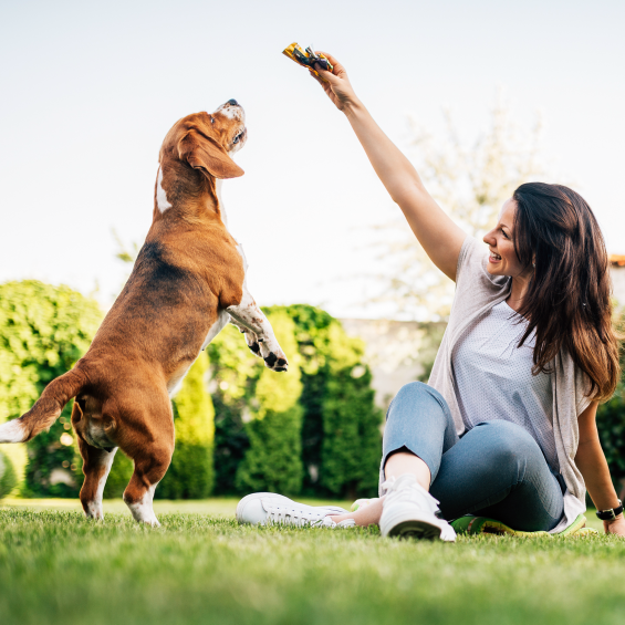 can-a-dogs-diet-affect-behaviour