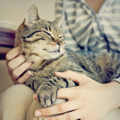 how-to-help-your-cat-lose-weight