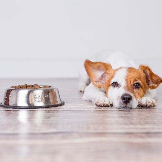 'how-to-spot-a-poor-diet-in-dogs