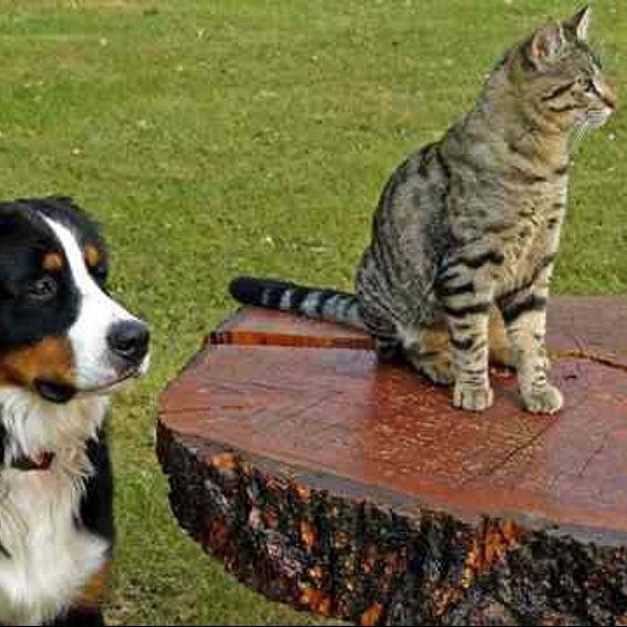 'meeting-the-needs-of-older-dogs-cats