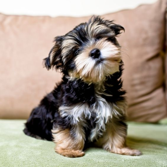 tips-for-owners-of-pandemic-puppies
