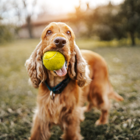 'positive-reinforcement-for-pets