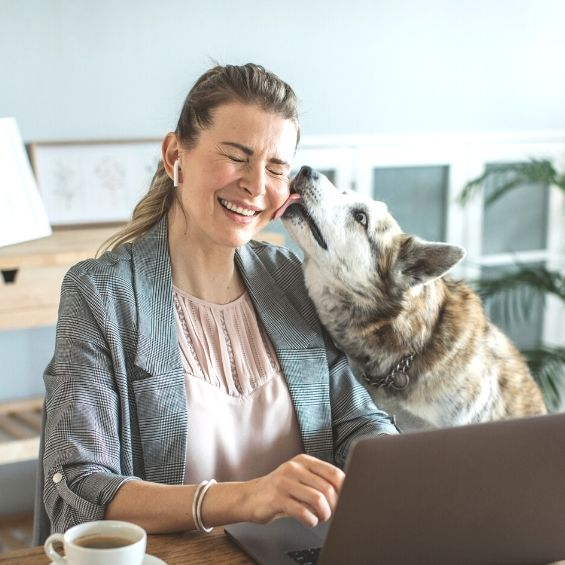 covid-and-its-impact-on-pets