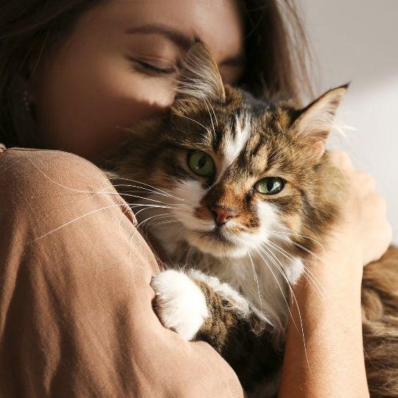 pdsa-animal-welfare-report-2021